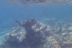 au secours, un monstre sous-marin
